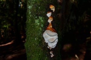 A cool fungus