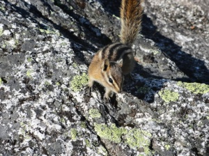 Chipmunk at the Summit