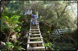 Ladder west coast trail