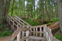 In the giant Cedar grove