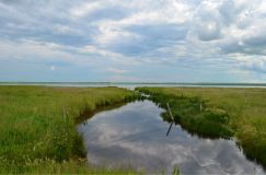 Shorebird reserve