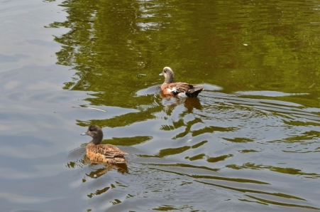 And cool ducks