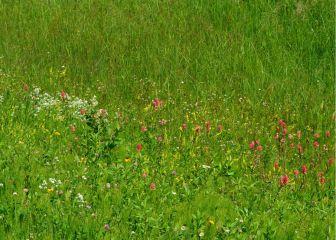 Passing fields of wildflowers