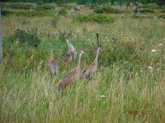 More cranes! (Alex's)