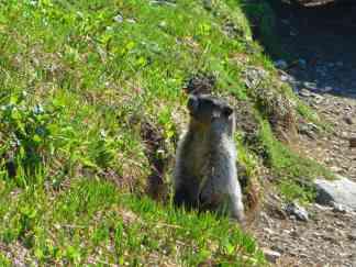 A marmot!!