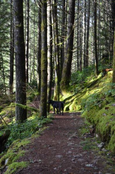 Porter on Alder Trail